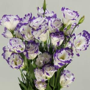 Цветы эустома - заказать в интернет-магазине