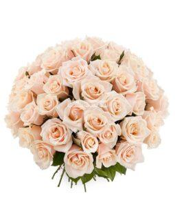 Купить кремовые розы недорого в Киеве